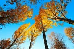 Le coucher du soleil d'arbres de chute et le ciel bleu photographie stock libre de droits