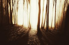 Le coucher du soleil dans la forêt enchantée avec le brouillard et le soleil lumineux rayonne Images stock