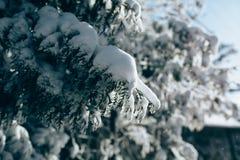 Le coucher du soleil dans le bois entre les arbres tend en hiver Photographie stock libre de droits