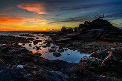 Le coucher du soleil de bonsaïs de roche Image libre de droits