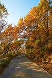 Le coucher du soleil de feuilles et de chemin de rouge de la montagne de Zu Photographie stock libre de droits