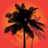 Le coucher du soleil de palmier silhouette le vecteur Images stock
