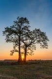 Le coucher du soleil derrière un arbre seul se tient dans le champ de maïs images stock
