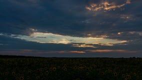 Le coucher du soleil dramatique au-dessus de l'des tournesols met en place clips vidéos