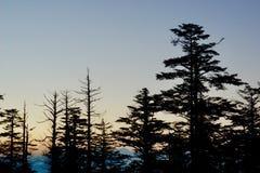 Le coucher du soleil est noyé dans la forêt de pin image libre de droits