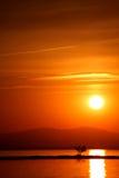 Le coucher du soleil et l'arbre Photos libres de droits