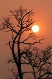 Le coucher du soleil et l'arbre Images libres de droits