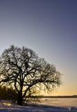 Le coucher du soleil hivernal, l'arbre et la glace ont couvert le lac Image libre de droits