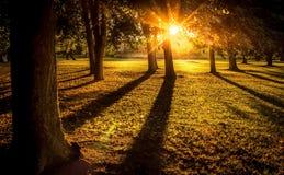 Le coucher du soleil lumineux avec Sun rayonne dans la forêt en septembre Images stock