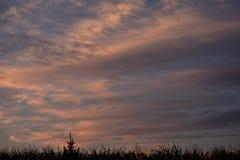 Le coucher du soleil opacifie bleu et orange dans la base de l'herbe Images libres de droits