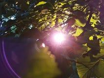 Le coucher du soleil par des feuilles Photographie stock