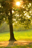 Le coucher du soleil rayonne des lames de cuvette photographie stock libre de droits