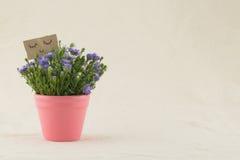 Le coupeur pourpre fleurit le bouquet dans le pot rose Photographie stock