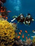 Le couple affectueux plonge parmi des coraux et des poissons Image libre de droits