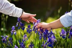 Le couple dans l'amour remet la fleur émouvante d'iris, fleur bleue d'iris en Th Image stock