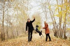 Le couple dans l'amour un jour chaud d'automne marche en parc avec un épagneul gai de chien Amour et tendresse entre un homme et  photographie stock libre de droits