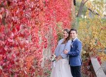 Le couple luxuriant de mariage étreint avant mur dans le lierre rouge photo stock