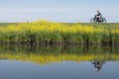 Le couple monte la bicyclette le long de l'eau de proche valleikanaal leusden en Hollande et passe les fleurs de floraison jaunes images libres de droits