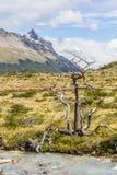 Le courant et l'arbre sec à Laguna Esmeralda traînent avec des montagnes Image libre de droits