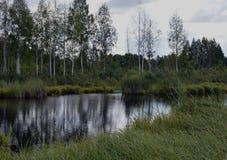 Le courant scénique d'extérieur d'extérieur scénique rural de jour de marais de forêt opacifie le lac bleu d'arbre de vert de res Photos libres de droits