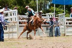 Le cowboy conduit le cheval sauvage Image libre de droits