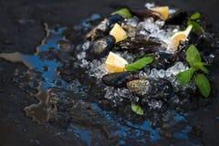 Le cozze crude fresche con il limone, le erbe e le spezie sullo scheggiato su ghiacciano il contesto scuro della pietra dell'arde immagini stock libere da diritti