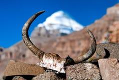 Le crâne du yak Photo stock