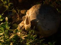 Le crâne est placé sur la pelouse et la lumière de la bougie au crâne concept de la mort et de Halloween image libre de droits