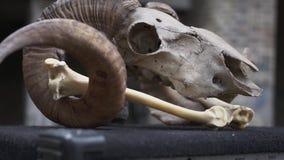 Le crâne et les os d'une RAM Attribut de succès, talisman, appui verticaux banque de vidéos