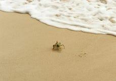 Le crabe blanc échappe au sable par l'onde Photographie stock libre de droits