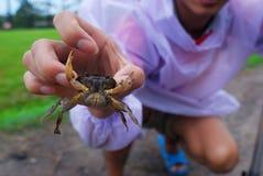 Le crabe d'eau douce est crochet dans la main humaine photos stock
