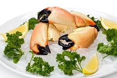 Le crabe en pierre griffe (le mercenaria de menippe) images libres de droits
