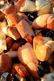 Le crabe griffe le fond Images libres de droits