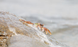 Le crabe montant la roche Images stock
