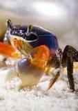 Le crabe sur le sable Images stock