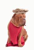 Le crabot a rectifié comme le chef avec le chapeau rouge de tablier et de chef Image libre de droits