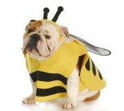 Le crabot a rectifié vers le haut comme une abeille photo stock