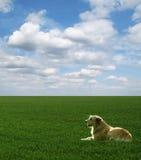 Le crabot se trouve sur la zone verte sous le ciel bleu photos libres de droits