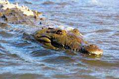 Le crocodile Photographie stock libre de droits