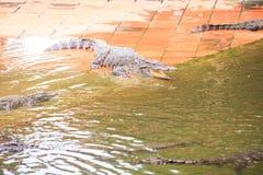 Le crocodile avec la bouche ouverte se trouve sur la terre par l'eau Image stock