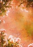 Le cru a dénommé la trame florale Images libres de droits