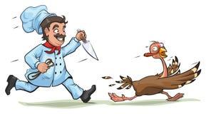 Le cuisinier avec le couteau poursuit la dinde effrayée Concept d'amusement pour le jour de thanksgiving Image libre de droits
