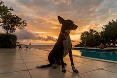 Le Curaçao poursuivent et les vues de coucher du soleil photos stock