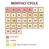Le cycle mensuel d'une femme Règles et ovulation Grossesse et famille de planification Jours favorables pour la conception Image libre de droits