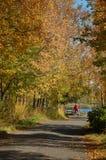 Le cycliste entre en automne Images libres de droits