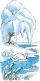 Le cygne a été laissé à l'hiver sur le lac Images libres de droits