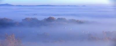 Le cygne de brouillard photographie stock