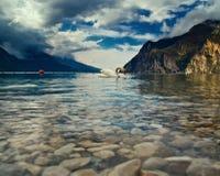 Le cygne et son lac Image libre de droits
