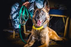 Le cynologist avec une patrouille de chien de garde Images libres de droits