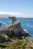 Le cyprès sur la roche Photos libres de droits